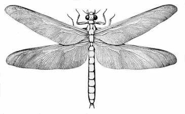 Griffinflies